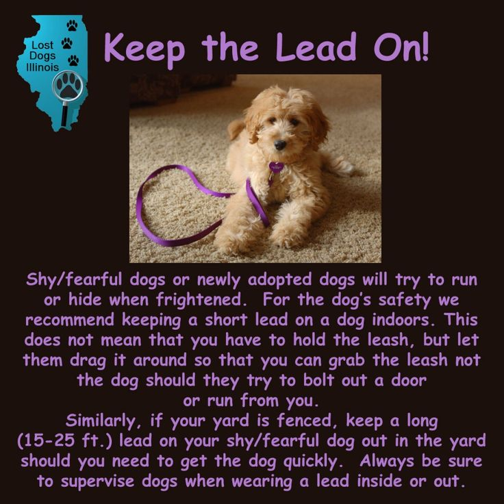 Best Missing Pet Tips Images On   Lost Pets Your Pet