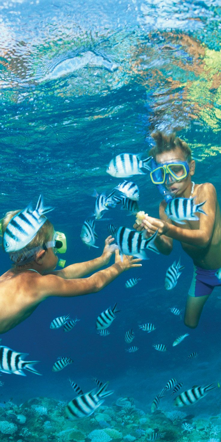Kids enjoying time snorkelling with scissortail fish around Malolo Lailai, Fiji - which is also known as Plantation Island.