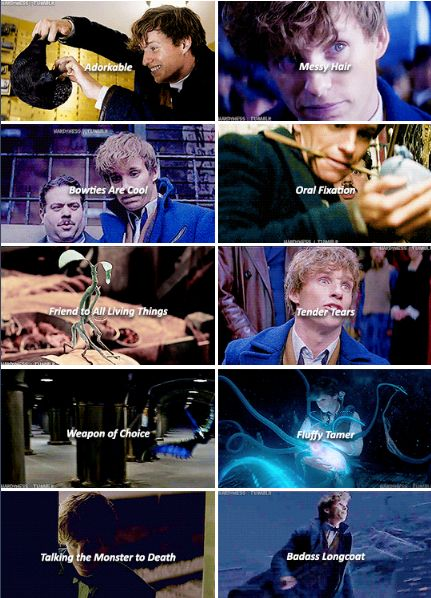 Newt Scamander - so many things to love about Newt. But I also definitely thought of The Doctor.