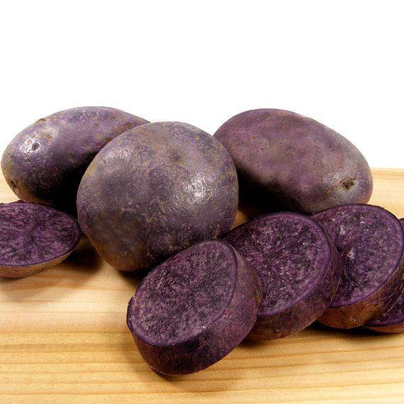 all-blue-seed-potato-certified-organic