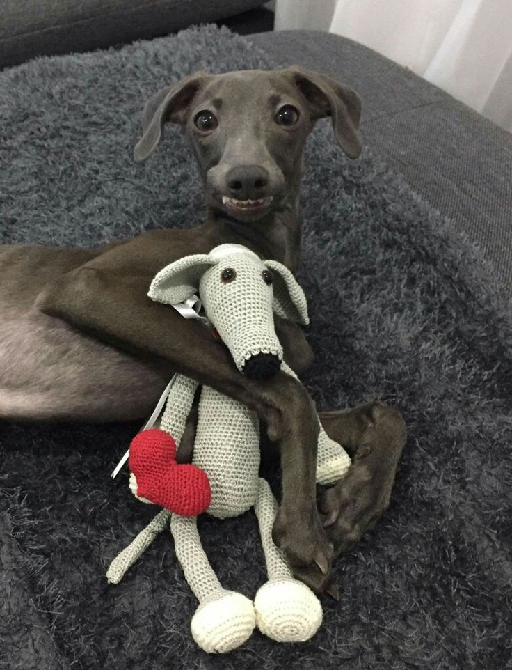 Cuteness alert!! Zemira and her doggie doll. Love her sweet smile. - Tap the pin for the most adorable pawtastic fur baby apparel! You'll love the dog clothes and cat clothes! <3 Italian Greyhound