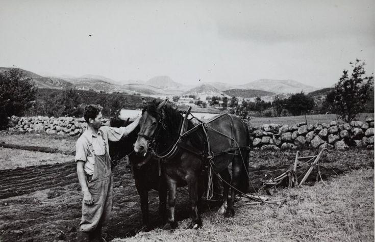 Pløying med hesteplog, fjellet i midten sannsynligvis Smørpigen @ DigitaltMuseum.no