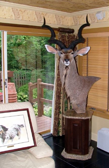 Custom Taxidermy Pedestals | Lloyd Jones Kudu pedestal mount on granite and walnut base