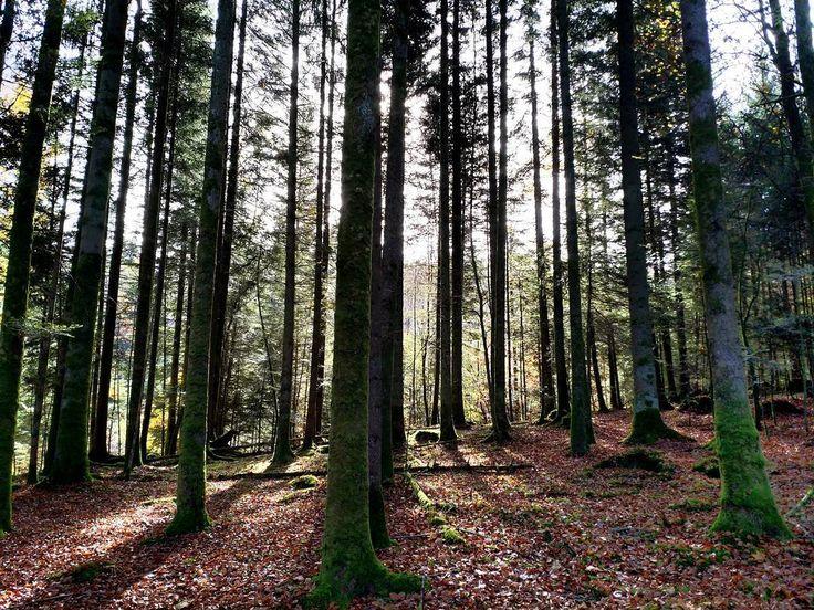 In Reih' und Glied.  #Naturmomente #Schwarzbubenland #Solothurn #Nunningen #Schweiz  #photooftheday #magicplaces #kraftorte #switzerland #switzerlandpictures #magicswitzerland  #nature #naturelovers #green #creek #forest #fall #autumn