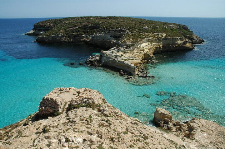 conigli Lampedusa: ponte naturale tra Africa ed Europa#Repin By:Pinterest++ for iPad#