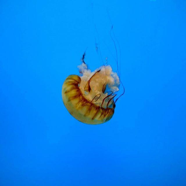 #aquarium #jellyfish #maryland #baltimore #usa #cieplikpodrozuje