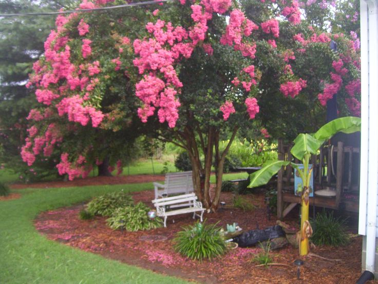 Pink crape myrtle and gold fish pond outdoor living for Landscaping rocks myrtle beach