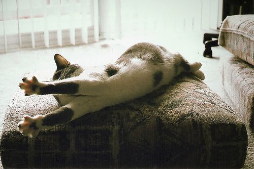 stretchIndiana, Cat, Cups, Hair Ties, Fur, Kittens, Kitty, Mornings Stretch, Animal