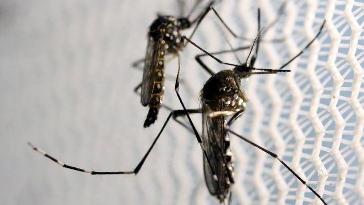 O jornal Le Monde volta a publicar uma grande matéria sobre a epidemia do vírus zika que...