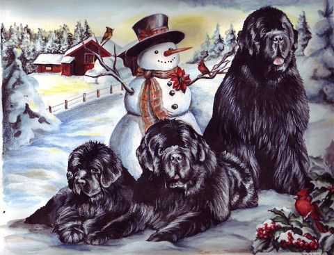 """Newf Christmas Cards"" (Maleo) - 12 cards"