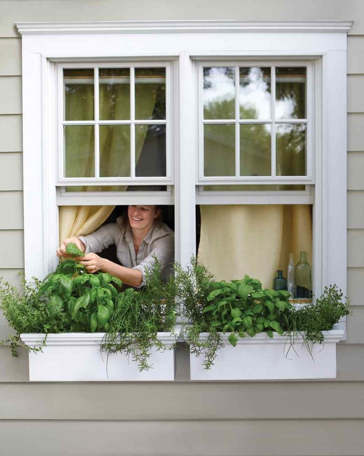 Gardens, Window Boxes And