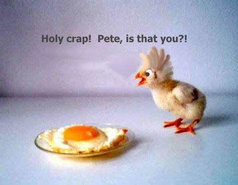 Holy crap! Pete, is that you? #lol #easter: Poor Pete, Easter, Funny Stuff, Humor, Funnies, Animal, Holy Crap