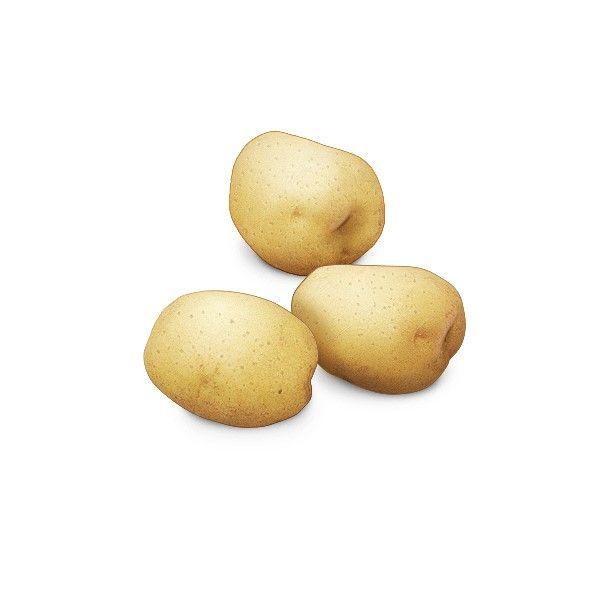 감자 (6~9월)