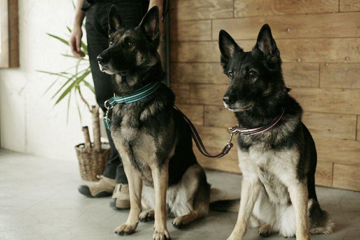 Collar&lead for dog