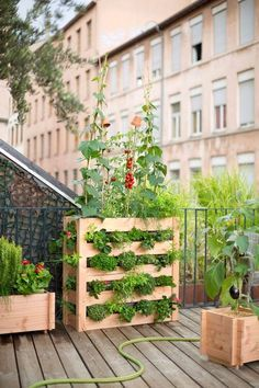 Potager vertical pour balcon ou petite terrasse