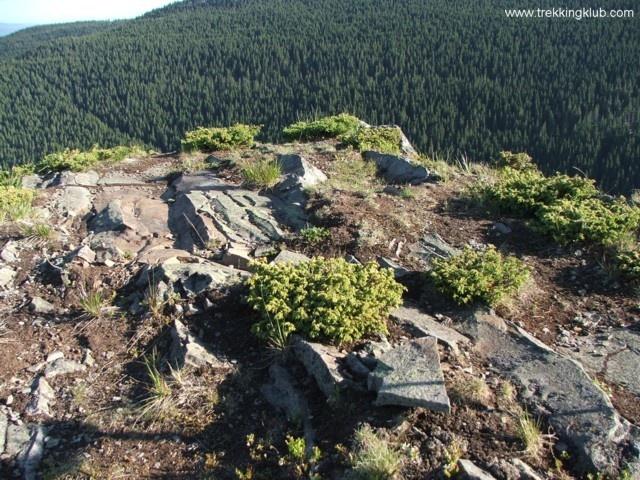 #Harghita Siculeni - On top of the Coltul Tesit