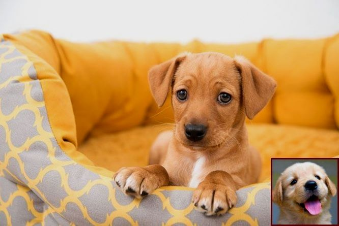 House Training A Puppy Guide And Dog Training Courses In Sri Lanka Dog Training Obedience Training Your Dog Dog Training