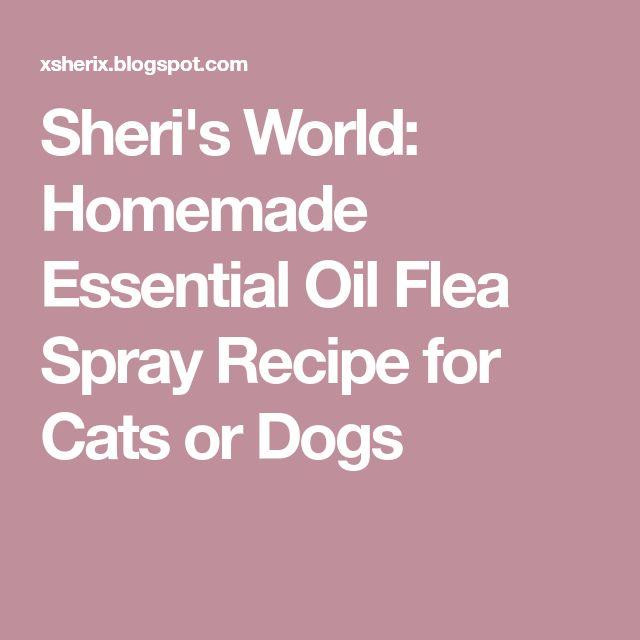 Sheri's World: Homemade Essential Oil Flea Spray Recipe for Cats or Dogs