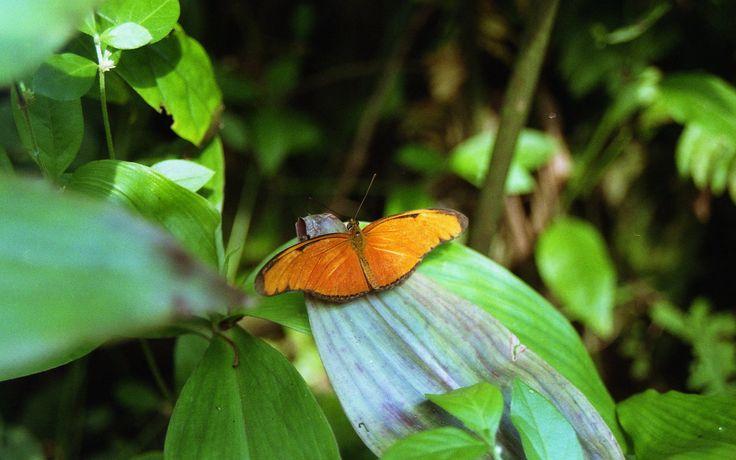 https://flic.kr/p/YDwRsE | Butterfly | Camera: Minolta X-700 Lens: Minolta MD Zoom 28-70 mm f/3.5-4.8 Film: Kodak ColorPlus 200 (Expired 2014) Scanner: Epson V500 (scanned from negative)