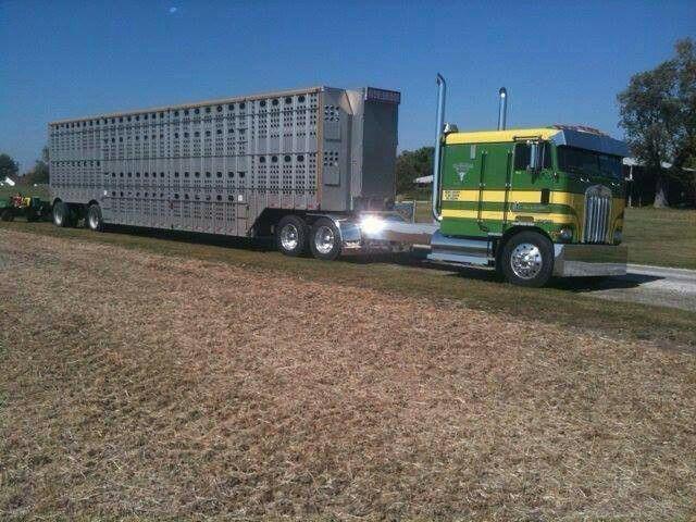 Kenworth pulling stock trailer.