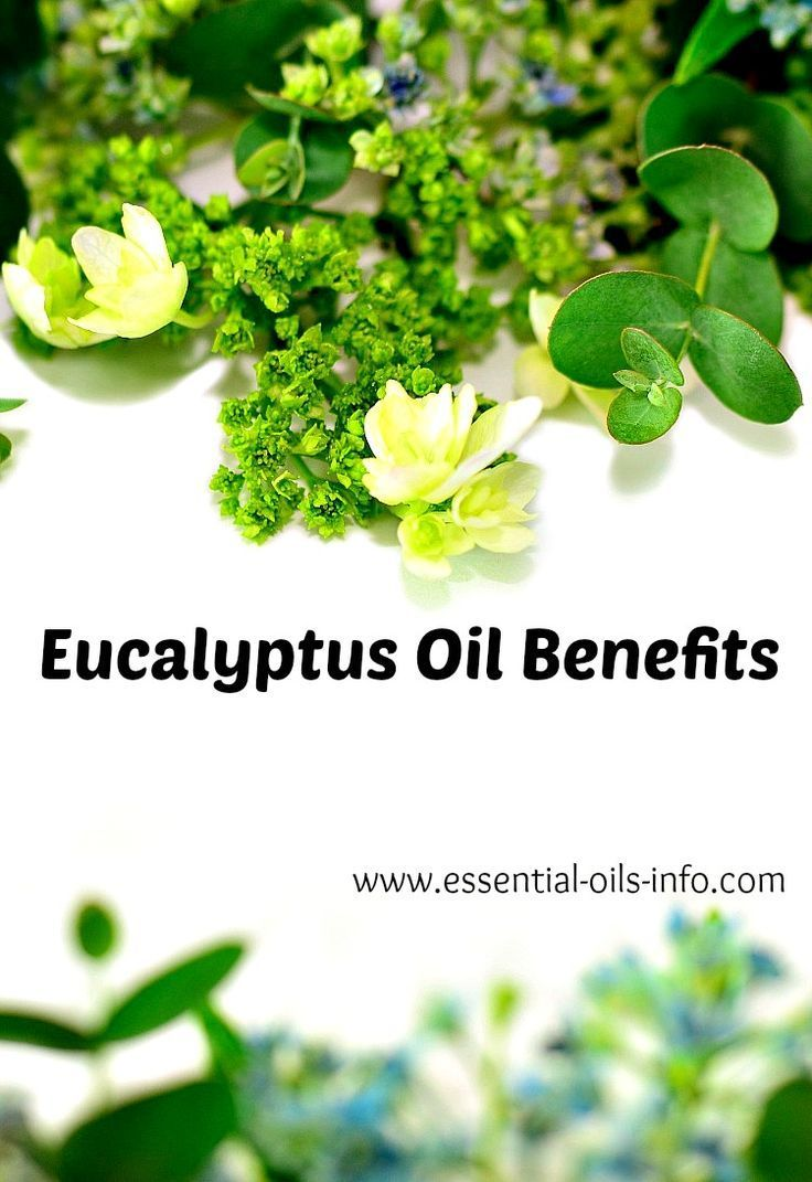Learn the eucalyptus oil benefits, uses, and recipes so you can use it effectively. #eucalyptusoil #yleo