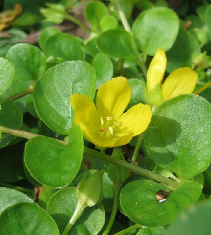 Jak Podlewac Rosliny Doniczkowe Podczas Urlopu Zielony Ogrodek In 2020 Plant Leaves Plants Leaves
