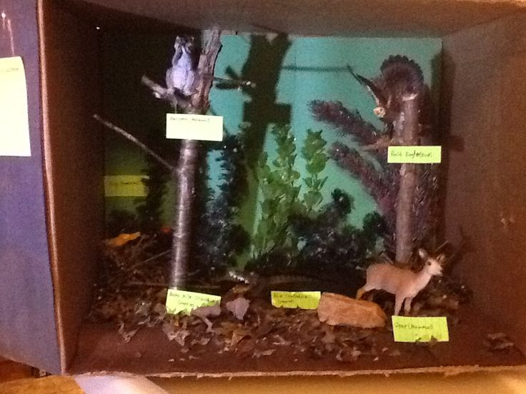 Swamp Diorama Diorama Shoe Box Diorama School Projects