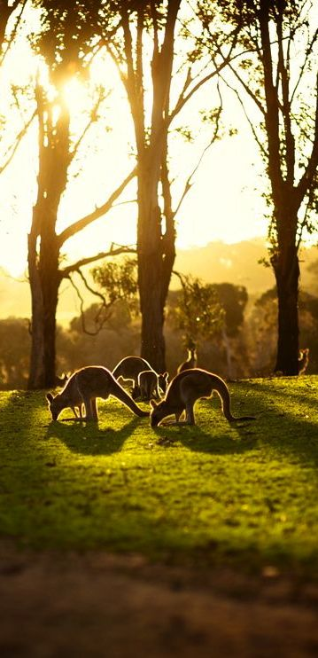 we have done it and yes it rocks...Walk amongst kangaroos in Australia