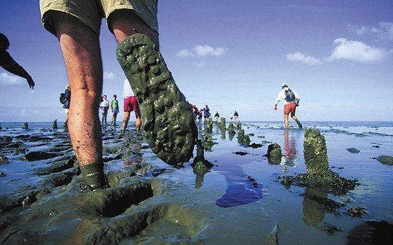 If you are brave enough to hike the Dutch mudflats, than you need to come prepared.