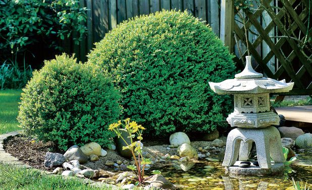 buchsbaum schneiden schablone buchsbaum schneiden. Black Bedroom Furniture Sets. Home Design Ideas