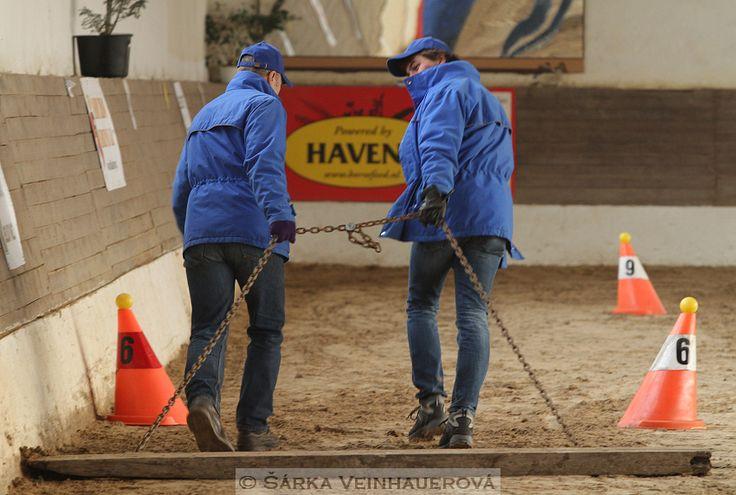 Slatiňanští modří hřebci - Blau Hengste aus Slatiňany - speziell gezüchtete Rasse für schwere noch heikle Arbeit. Sie sind ruhig, einfach zu bedienen, fleißig, leicht zu ernähren und Pflege. :)