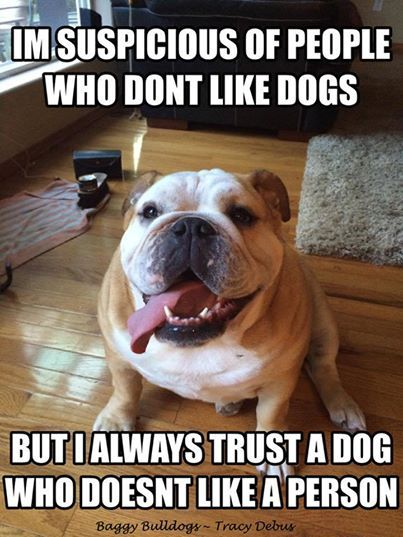 english bulldog memes best 25 english bulldog pictures ideas on pinterest 5845