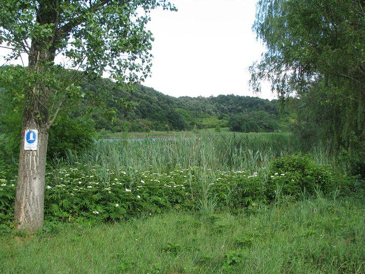 Garancsi-tó és tanösvény (Piliscsaba közelében 1.2 km) http://www.turabazis.hu/latnivalok_ismerteto_4028 #latnivalo #piliscsaba #turabazis #hungary #magyarorszag #travel #tura #turista #kirandulas
