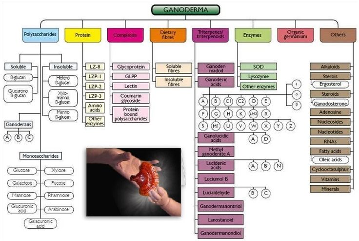 Ganoderma ingredients chart