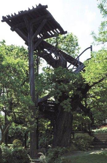 L'arbre de Robinson, Le Plessis-Robinson