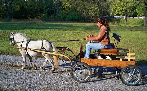 Imagine the joy and freedom of teaching and educating your miniature horse or pony to pull a cart or wagon at home. This new EZ-Trainer is perfect for people that know absolutely nothing about teaching and training a miniature horse or small pony to pull a cart.  The  EZ-Trainer along with you, a helper, a riding lawnmower (4 wheeler, golf cart) and our detailed instructions will teach your little  pony to pull a cart in 30 days! Sales promotion by Lil Beginnings Miniature Horses