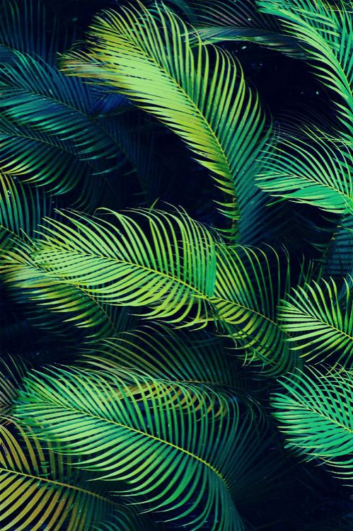 Palm Trees, Tropical Trend, See more texture inspirations at http://www.brabbu.com/en/inspiration-and-ideas/