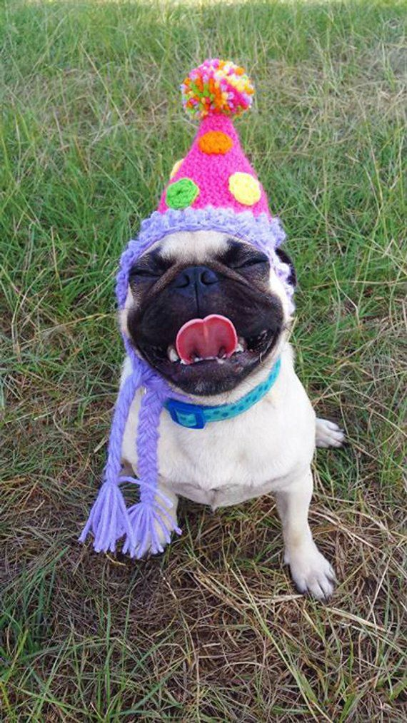 Birthday Party Dog Hat Costume