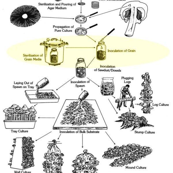 Mushroom cultivation diagram - Paul Stamets