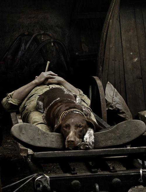 A Faithful Partner  MILITARY WAR DOGS