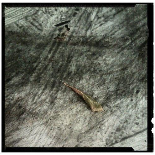 #leaf #macro #minimal #sergepichii