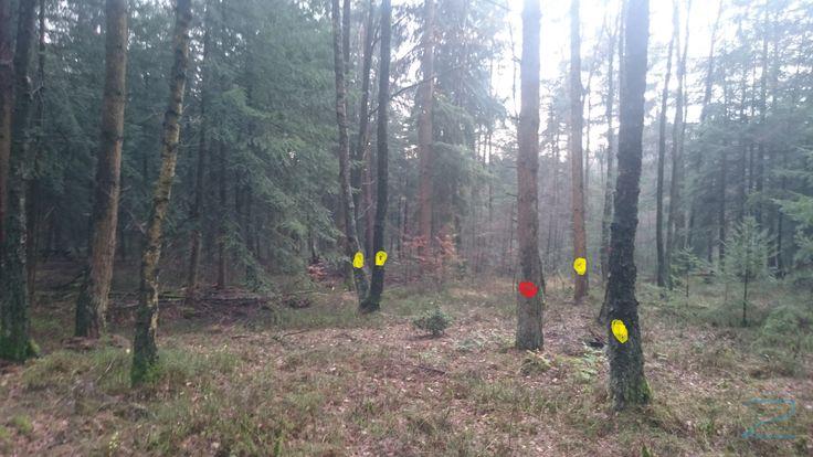Vegetatie: berk, grove, bosbes Gele punt: Vellen en afvoeren; deze bomen om op deze plek een open ruimte te creëren. Rode punt: We trekken de boom om naar de noordoost kant. Zuidwest wind komt het meeste voor daarom willen dieren het liefst aan de noordoost kant nestelen omdat daar de minste wind vandaan komt.  Dit heeft ook als voordeel dat je liggend doodhout en reliëf hebt gecreëerd.