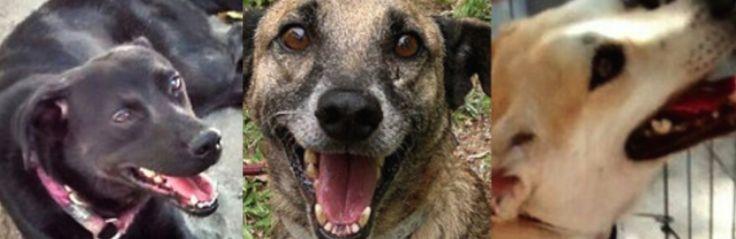 Adoção de cães e gatos: Niterói dá o exemplo
