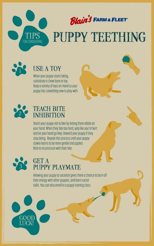 Pin On Puppy Training Nipping