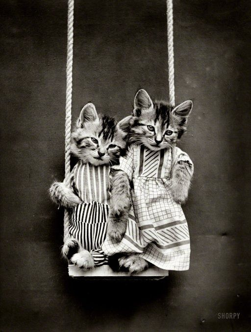 """1914. """"Two kittens in costume on swing."""" Posed by Harry W. Frees, founding father of photographic feline anthropomorphism."""