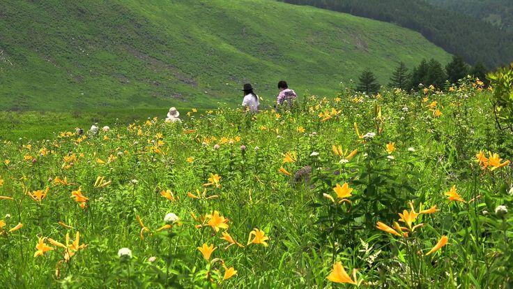 Yemyeşil Kırlarda Doğa Yürüyüşü
