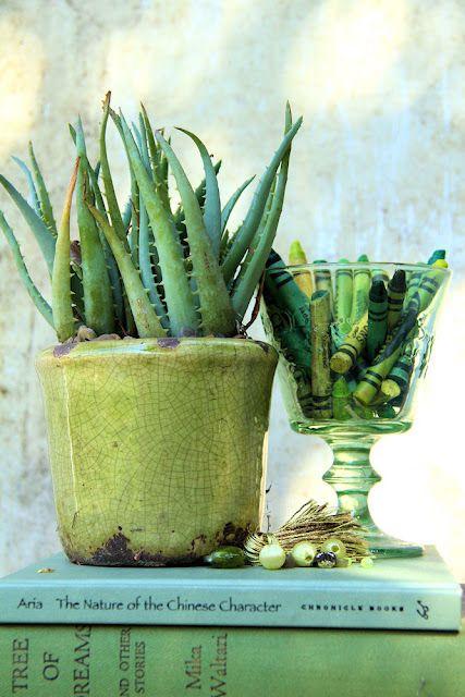 still life: Plants Decor, Colors Theme, Green Life, You, Fleas Marketing, Crayons, Shades Of Green, Aloe Vera,  Flowerpot