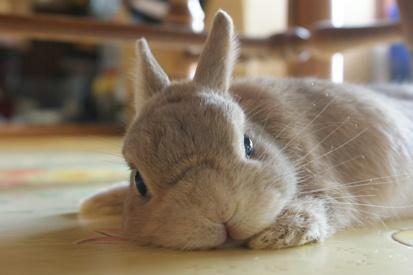 うさぎとかいうめたっくそかわいい草食動物wwwwwwww