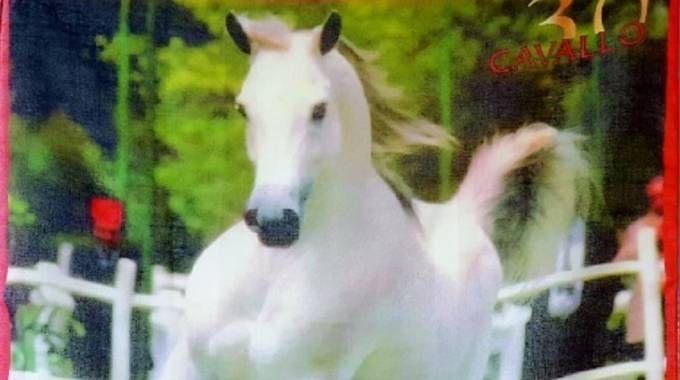 Per chi si abboneràa Cavallo Magazine a Verona tre sorprese molto speciali: uno sconto super, il foulard del 30° compleanno con la fotografia di copertina del nostro primo numero, una copia di Cavallo Junior e lo zainetto di InTheSaddle