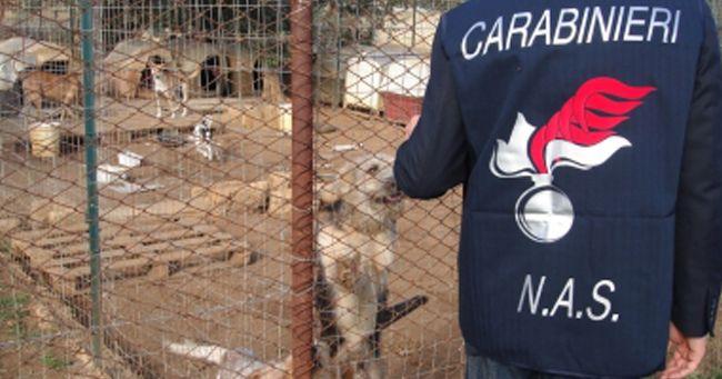 Animali maltrattati, canile di Caserta chiuso
